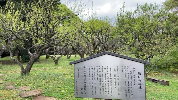 赤塚城跡(板橋区)二郭説