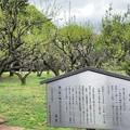 Photos: 赤塚城跡(板橋区)二郭説