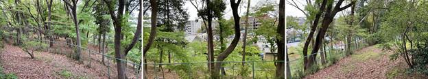 赤塚城跡(板橋区)二郭説より東・外堀跡