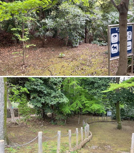 Photos: 赤塚城跡(板橋区)三郭説