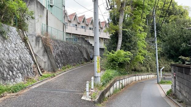 Photos: 赤塚城跡(板橋区)二郭説南・谷