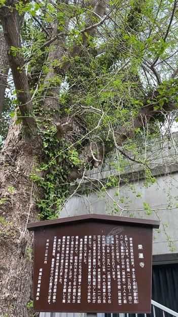 Photos: 乗蓮寺(板橋区)