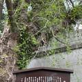 乗蓮寺(板橋区)