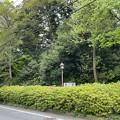 Photos: 赤塚不動の滝(板橋区)