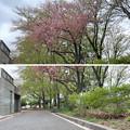 Photos: 赤塚城跡(板橋区)外郭説