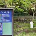 Photos: 赤塚城跡(板橋区)外堀跡
