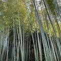 英勝寺(鎌倉市)竹林