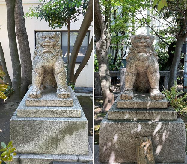 猿江神社(江東区)狛犬