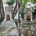 Photos: 猿江神社(江東区)狛犬