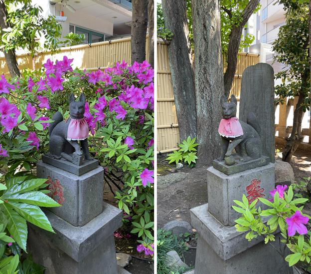 藤森稲荷神社(江東区)狐さま