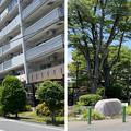 Photos: 藤沢市藤が岡界隈(神奈川県)