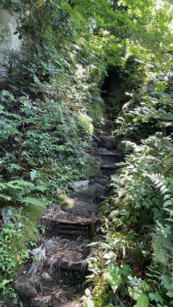 寿福寺境内 源氏山ハイキングコース(鎌倉市)