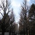 東大銀杏並木・先 東京大学本郷キャンパス正門(文京区)