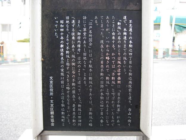 動坂(千駄木4丁目・駒込4丁目)