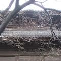 吉祥寺(本駒込3丁目)経蔵
