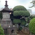 吉祥寺(本駒込3丁目)二宮尊徳墓碑
