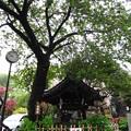 白山神社(白山5丁目)