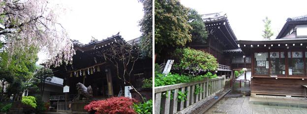12.04.23.白山神社(白山5丁目)