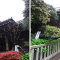 Photos: 12.04.23.白山神社(白山5丁目)