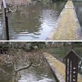 水戸殿上屋敷跡(文京区小石川)小石川後楽園 西湖の堤