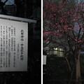 11.03.01.北野神社(牛天神。春日1丁目)中島歌子歌碑