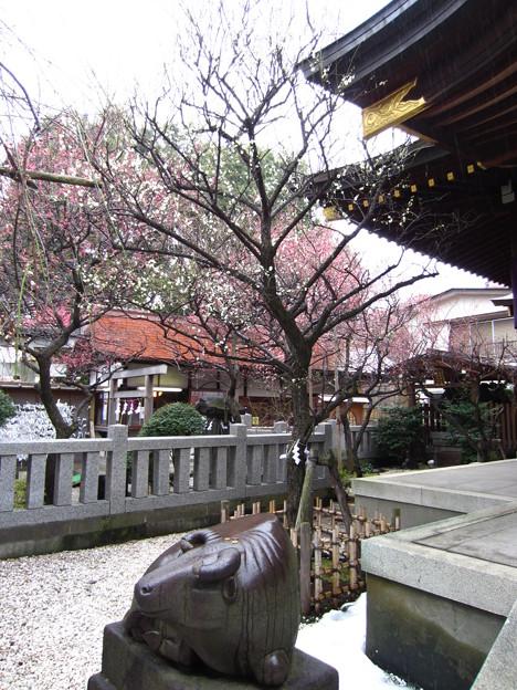 12.03.02.北野神社(牛天神。春日1丁目)