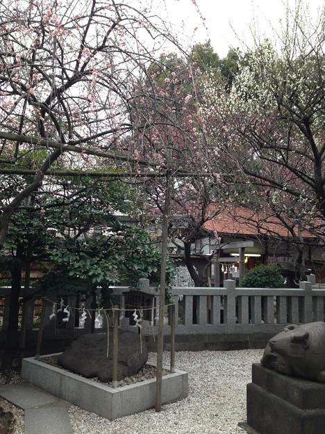 13.02.15.北野神社(牛天神。春日1丁目)撫で岩(牛石)