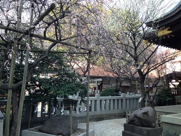 13.02.26.北野神社(牛天神。春日1丁目)
