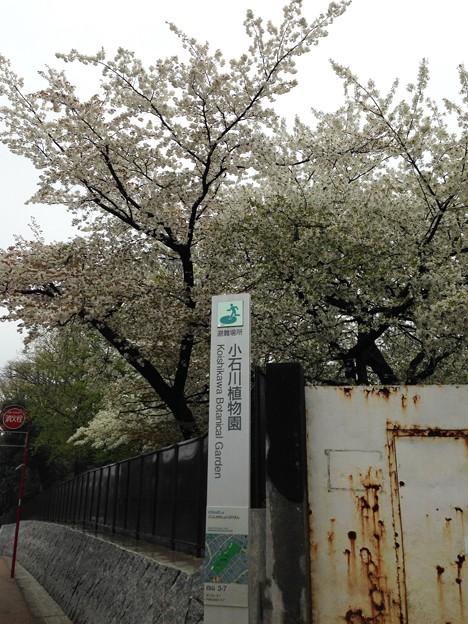 14.04.03.小石川養生所 御薬園跡(白山3丁目)小石川植物園 東角