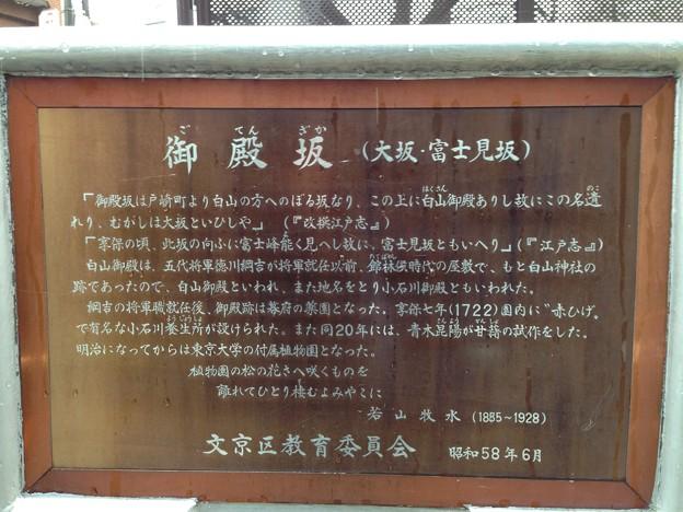 小石川養生所 御薬園跡(白山3丁目)小石川植物園 東南面 御殿坂