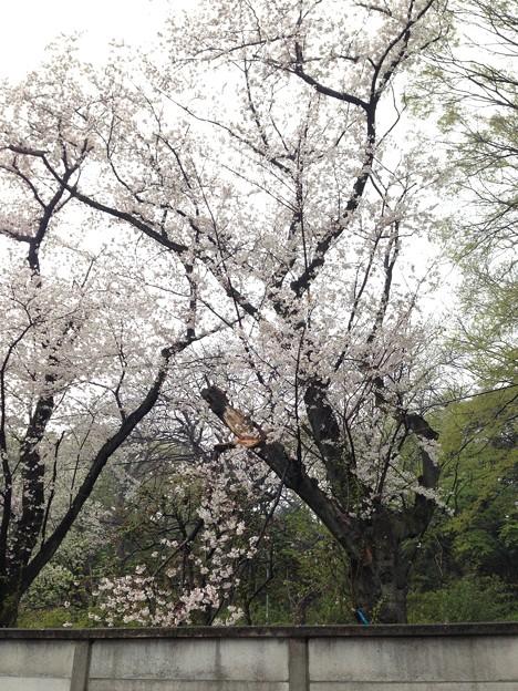 14.04.03.小石川養生所 御薬園跡(白山3丁目)小石川植物園 南西面