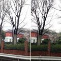 高井石見守下屋敷跡(白山3丁目)小石川植物園 西角近く