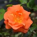 Photos: オレンジ色かな~