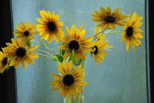 窓際の切り花~