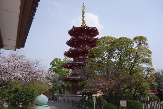 川崎大師  五重塔と桜