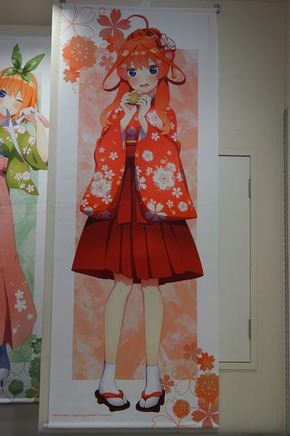 五等分の花嫁∬ 五月ちゃん 桜和装ver. 等身大タペストリー
