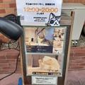 町田 ネコカフェ (=゚ω゚=)