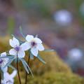 Photos: 花の季節