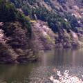 Photos: 深山
