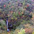 色づく青い滝