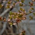♪春よ来い