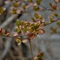 Photos: ♪春よ来い