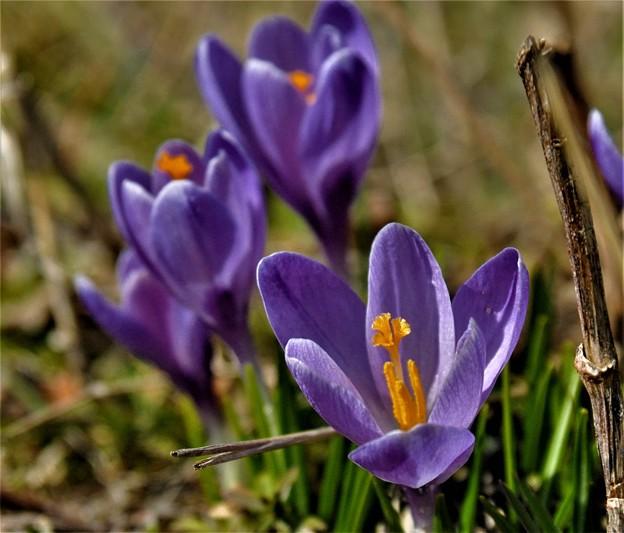 夷地に春の予感(2)