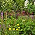 賑やかなお庭