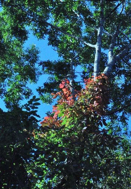 色づき始めた樹木