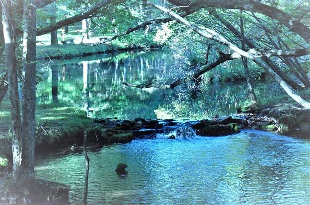 森の中の流れ