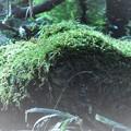 苔~種の起源