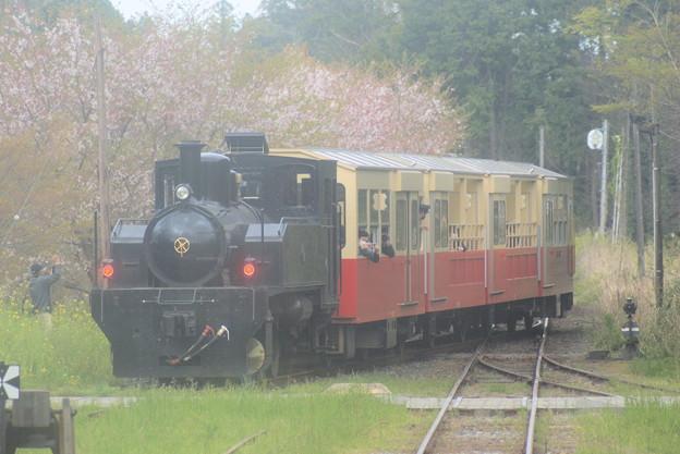 #8240 小湊鐵道 里山トロッコ列車 2021-4-3