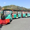 #8610 園内遊覧列車「ポッポさん」_2021-4-10