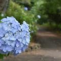 Photos: 離宮公園の夏至2